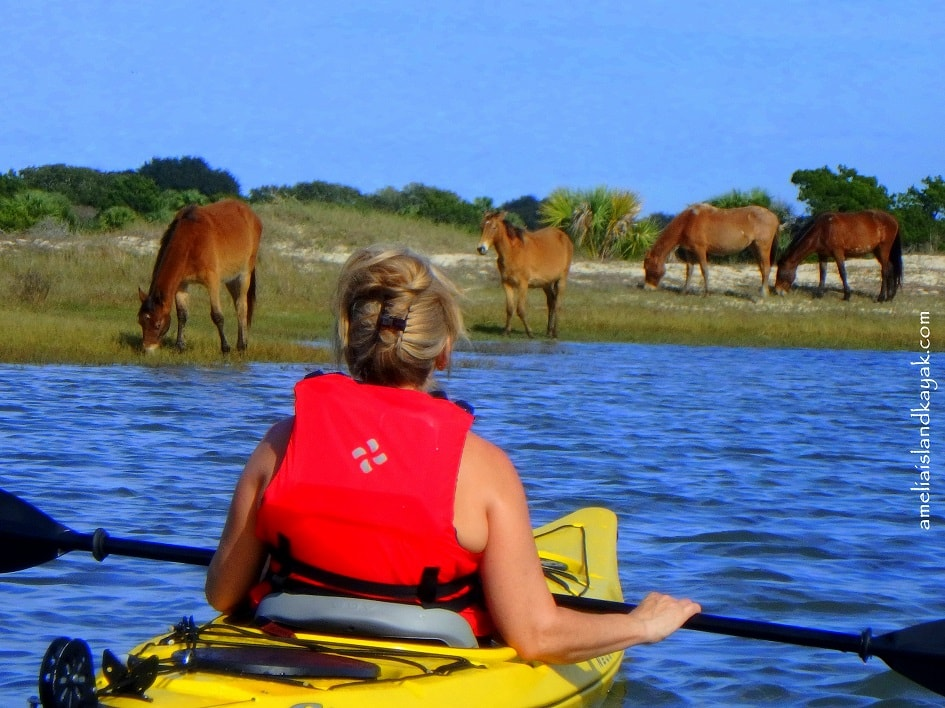 Person in a kayak looking at horses on the shoreline